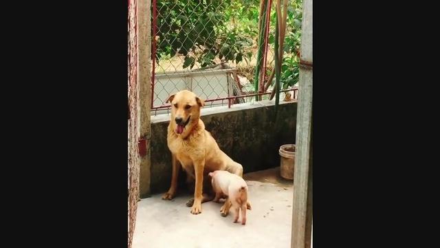 Download nhạc hot Ahihi Đồ Chó Lợn online miễn phí