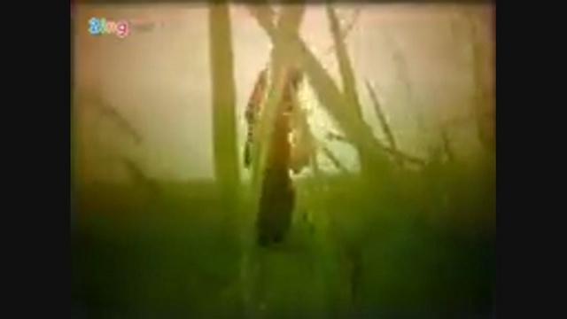 MV Tình Ca Trên Lúa - Duy Hòa, Thúy Trang   Video - Mp4 Online
