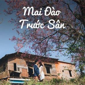 Download nhạc hot Mai Đào Trước Sân Mp3 miễn phí về máy