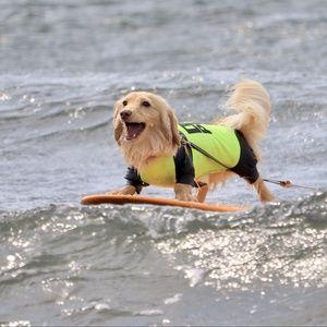 Tải nhạc hay surf Mp3