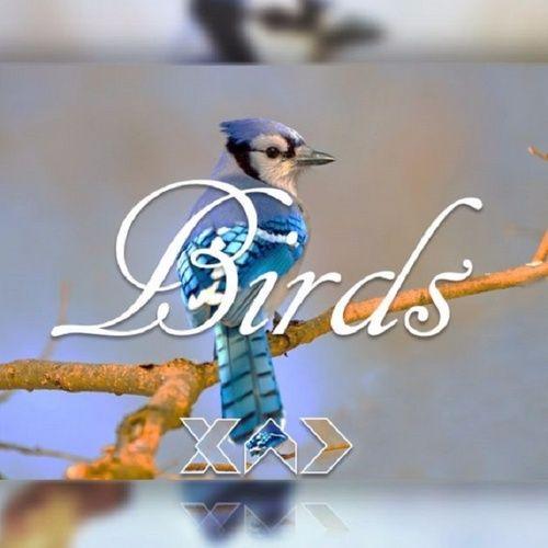 Tải bài hát Birds Mp3 online