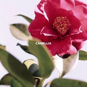 Nghe và tải nhạc hot Camellia